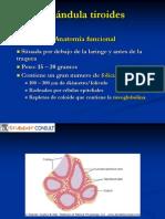 WH Glándula tiroides