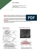 6. Trasmissione sinaptica