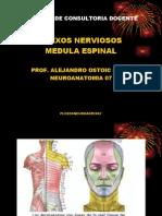 Ppt Plexos Nerviosos y Medula