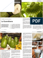Planta Guanabana o Graviola