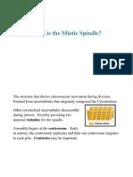 Bio Flash Cards Mitosis
