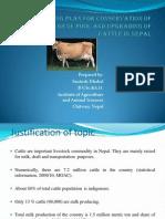 cattle breeding plan
