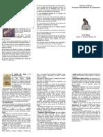 El Ave Mara y 15 Promesas a Los Rezen El Rosario
