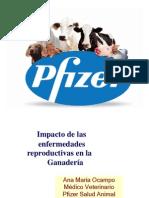 Charla Pfizer Reproduccion