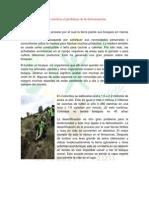 Deforestacion Parte 1_2_Estephani Rodriguez Palma