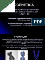 Citogenética
