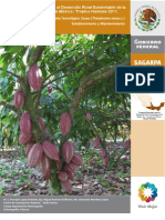 Cacao Establecimiento