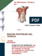 Musculos Torax y Abdomen