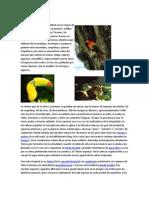 Eco Site Mas