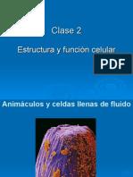 Clase 2 Celula