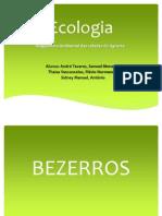 Ecologia GRUPO 2