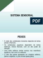 Sistema_Sensorial