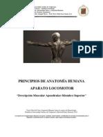Descripcion Musculos Apendiculares Miembro Superior 2011