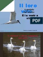 L'istinto guida gli uccelli,cosa guida l'uomo