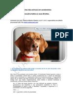Cães em apartamento - direitos e deveres