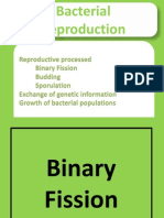 Bacteria Presentation