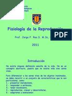 07FisReprDiferenciacionGMasculina2011