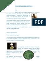 PRODUCCIÓN DE ESPÁRRAGOS