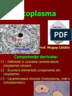 Citoplasma Fundamentala(Prezentare Catalin)