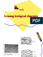 Bio Drawing Introduction