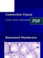 Connective Tissue Lecture1