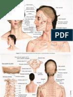 Anatomia - Ossos