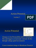 Action Potential Lec # 4