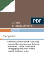 Enzim transaminase