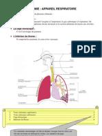 anatomie1