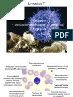 Maduracin Activacin de LinfocitosLinfocitos T