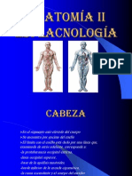 anatomia2-1