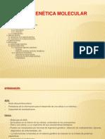 U.D 7 Genética molecular - copia - copia (2)