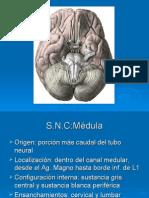 Clase de Medula y Cerebelo Clase 3