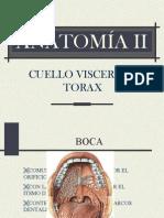 anatomia2b