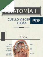 AnatomÍa Iib 4
