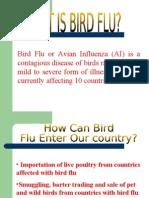 Birds Flu