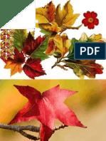 Imagens Do Outono