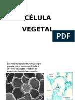 1_5celula