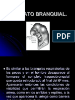 Embriologia Cabeza y Cuello 2