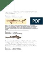 40 Especies de Interes Para Los Pescadores Deportivos Del Uruguay (2)