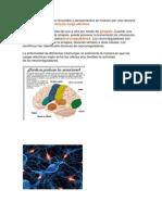 Paginas de Estudio Sistema Nervioso