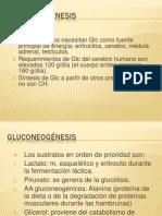 GLUCONEOGÉNESIS