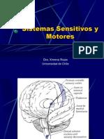 Anatomía IV - Sistemas sensitivos y motores