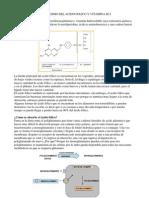 Metabolismo Del Acido Folico y Vitamina b12