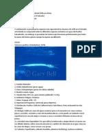 Tipos de Peces y Su Pesca Desde Orilla en El Mar