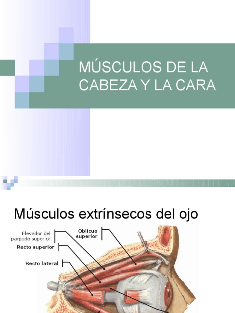 4.MÚSCULOS DE LA CABEZA