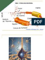 material de apoyo psicobiología