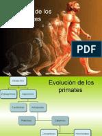 Evolución de los Primates