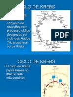 4B-Ciclo d e Krebs