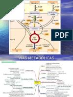 4A Glicólise